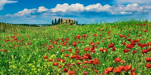 Krahmer, Frank 아티스트의 Farm house with cypresses and poppies, Tuscany, Italy 작품